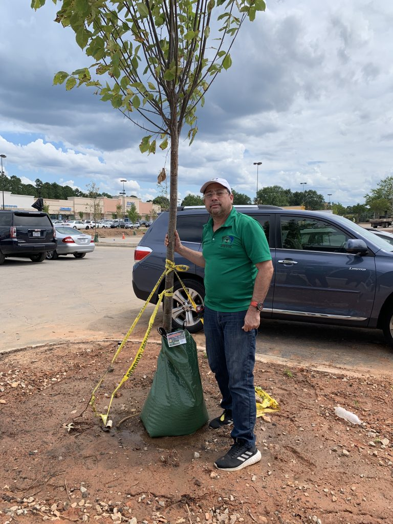 PROJECTSRFUSA. Image 1. Tree for Planting (PROJECTS RF USA - AGO2019)