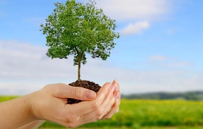 How to Plant a Tree Promoting Its Development